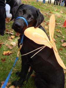 Canine Companion 2